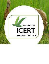 Organik Peternakan Layanan